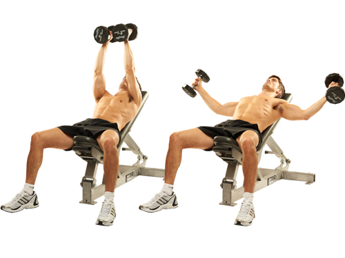Gallery For > Chest Flys With Dumbbells