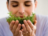 Uses Of Herbs In Hair Care