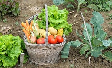 Home Vegetable Gardening in Pakistan Urdu for Kitchen Tips