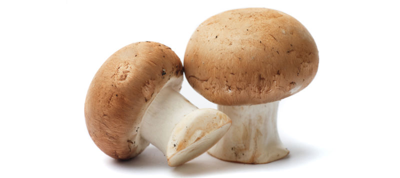 How to Start Mushroom Business in Pakistan Farming Training in Urdu